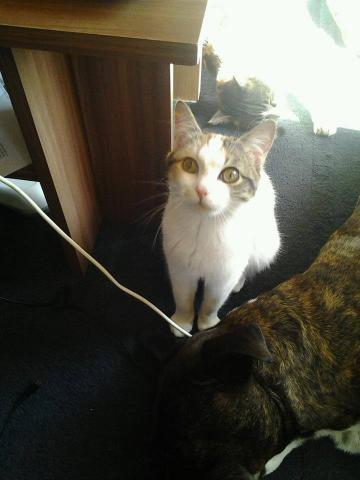 Les chats à adopter qui s'entendent avec les chiens Image.php?dossier=uploads&image=1003282_101522746304
