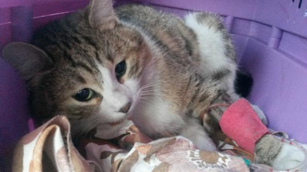 Nos positifs !! 45 amours de chats à adopter - Page 3 Image.php?dossier=uploads&image=20150212_180321_resi