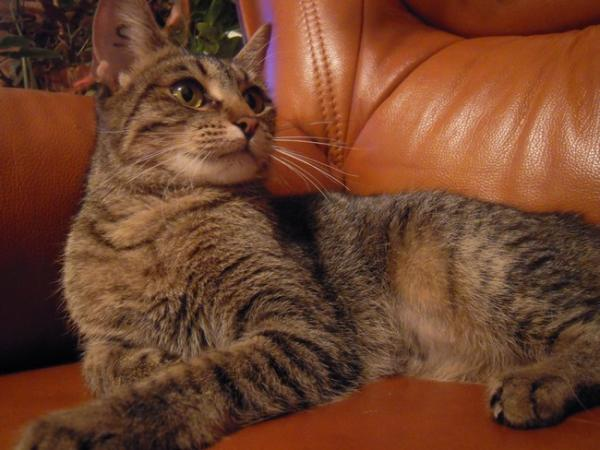 Nos positifs !! 45 amours de chats à adopter Image.php?dossier=uploads&image=abigaAlle