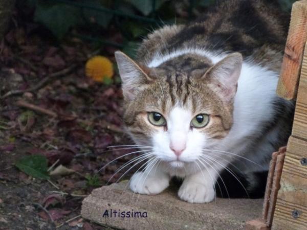 Les mamies et papis chats à l'adoption :) - Page 2 Image.php?dossier=uploads&image=altissimabus