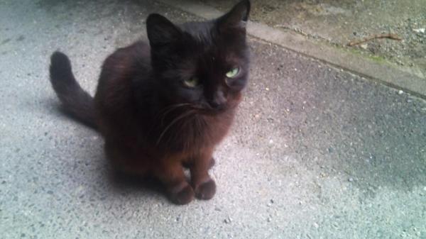 Nos positifs !! 45 amours de chats à adopter - Page 3 Image.php?dossier=uploads&image=amapola_petite_chatt