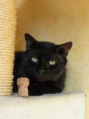 Nos positifs !! 45 amours de chats à adopter Image.php?dossier=uploads&image=arno030911