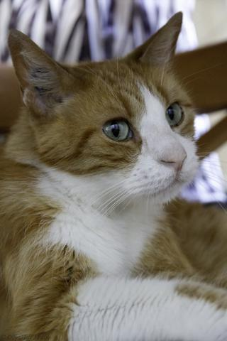 Les mamies et papis chats à l'adoption :) - Page 2 Image.php?dossier=uploads&image=auchan1708