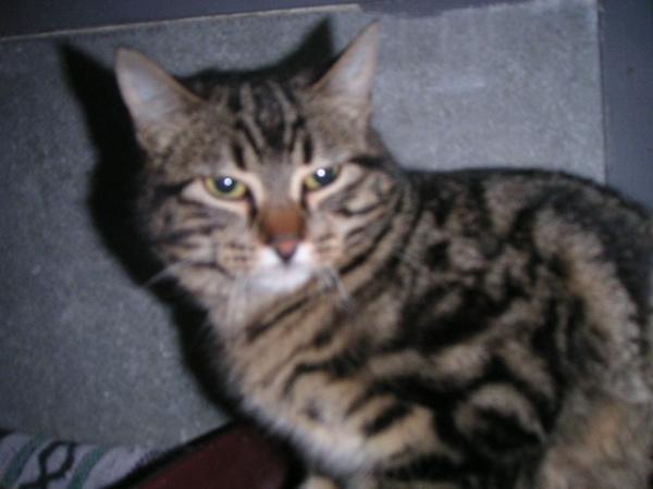 Les mamies et papis chats à l'adoption :) - Page 3 Image.php?dossier=uploads&image=beroi