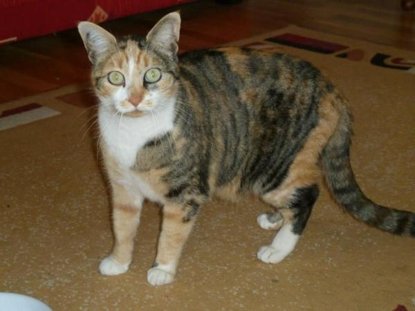 Les mamies et papis chats à l'adoption :) - Page 3 Image.php?dossier=uploads&image=betty_boop