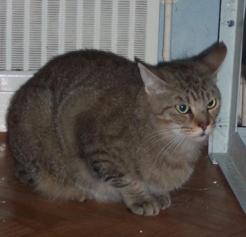 Les chats à adopter qui s'entendent avec les chiens Image.php?dossier=uploads&image=bill_2