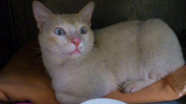 Les chats à adopter qui s'entendent avec les chiens Image.php?dossier=uploads&image=blue060513