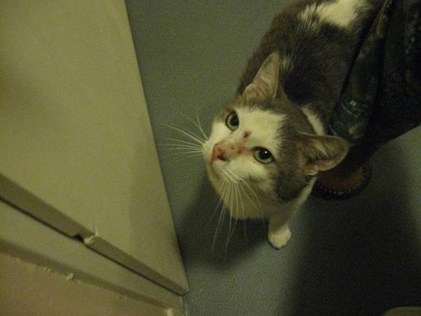 Nos positifs !! 45 amours de chats à adopter - Page 3 Image.php?dossier=uploads&image=blues_5