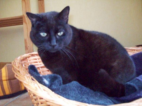Les mamies et papis chats à l'adoption :) - Page 2 Image.php?dossier=uploads&image=brisby_15-4_copy