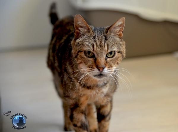 Nos positifs !! 45 amours de chats à adopter - Page 3 Image.php?dossier=uploads&image=brunelle9_light