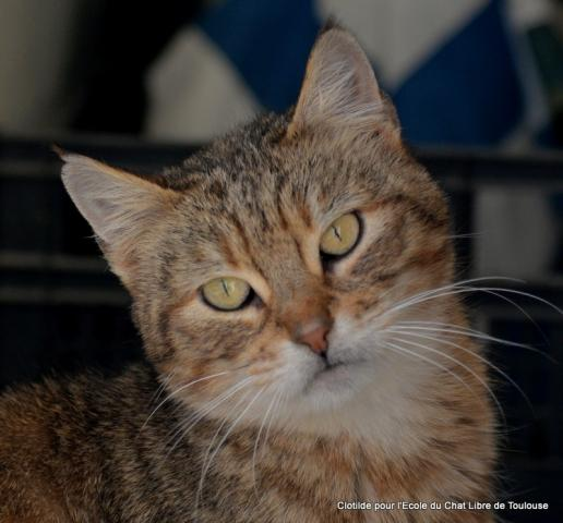 Nos positifs !! 45 amours de chats à adopter - Page 3 Image.php?dossier=uploads&image=carame10