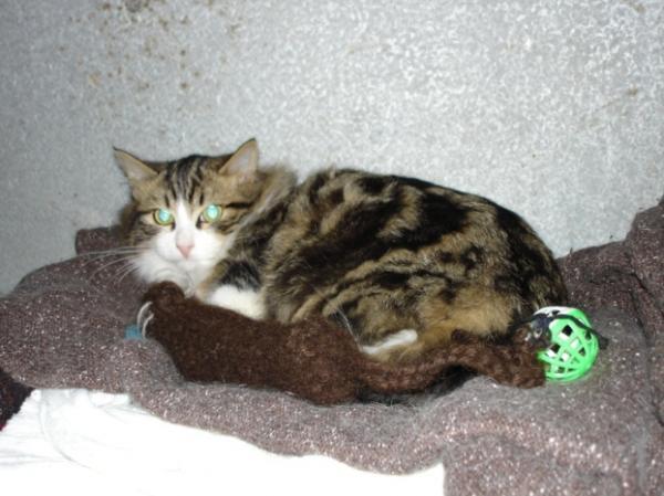 Les mamies et papis chats à l'adoption :) - Page 3 Image.php?dossier=uploads&image=chipie