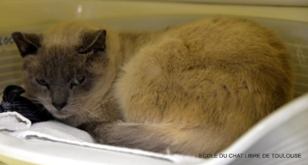 Nos positifs !! 45 amours de chats à adopter - Page 3 Image.php?dossier=uploads&image=clyde10