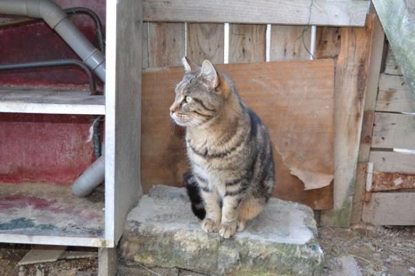 Les mamies et papis chats à l'adoption :) - Page 2 Image.php?dossier=uploads&image=cotty211