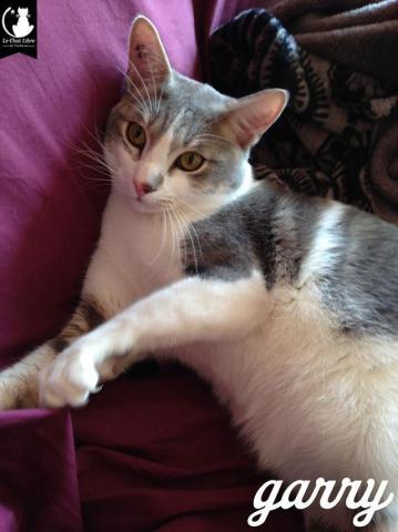 Les chats à adopter qui s'entendent avec les chiens - Page 2 Image.php?dossier=uploads&image=garry2016_1_copy