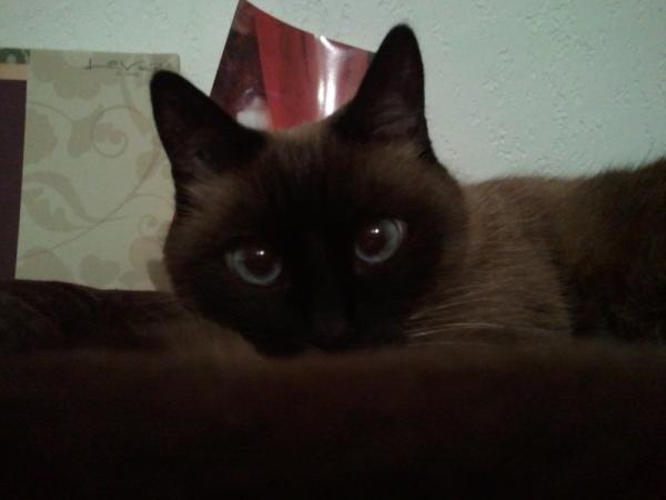 Les mamies et papis chats à l'adoption :) Image.php?dossier=uploads&image=gipsy_lou
