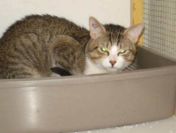 Nos positifs !! 45 amours de chats à adopter - Page 2 Image.php?dossier=uploads&image=guerava0604