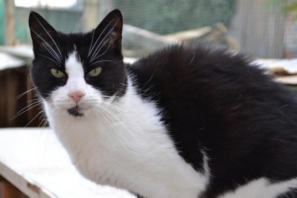 Les mamies et papis chats à l'adoption :) - Page 2 Image.php?dossier=uploads&image=holla211