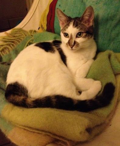 Les chats à adopter qui s'entendent avec les chiens Image.php?dossier=uploads&image=ilandremajs