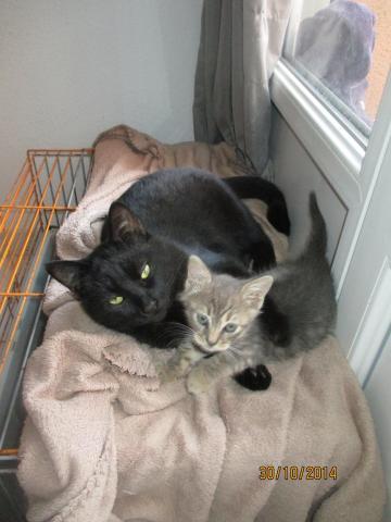 Les chats à adopter qui s'entendent avec les chiens Image.php?dossier=uploads&image=img_1795
