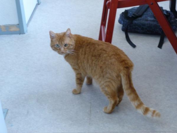 Les chats à adopter qui s'entendent avec les chiens Image.php?dossier=uploads&image=iscia