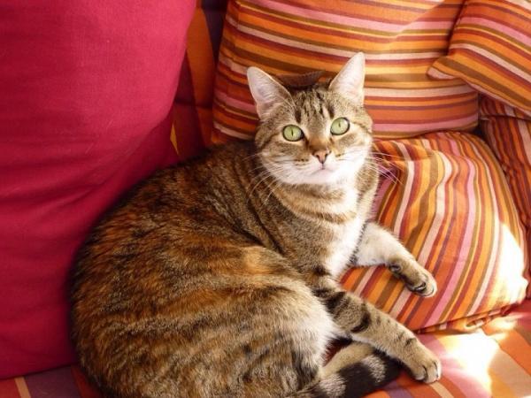 Les mamies et papis chats à l'adoption :) - Page 2 Image.php?dossier=uploads&image=lilou