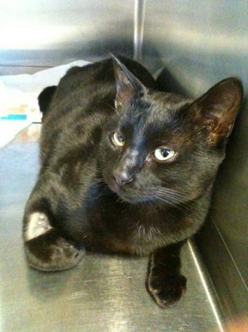 Nos positifs !! 45 amours de chats à adopter Image.php?dossier=uploads&image=lilou10