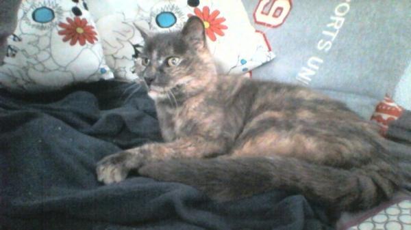 Les mamies et papis chats à l'adoption :) - Page 2 Image.php?dossier=uploads&image=loumia