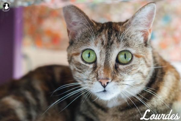 Nos positifs !! 45 amours de chats à adopter - Page 3 Image.php?dossier=uploads&image=lourdes2015_1_copy