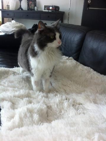 Les mamies et papis chats à l'adoption :) - Page 2 Image.php?dossier=uploads&image=majoub