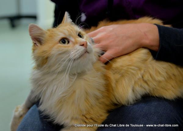 Les mamies et papis chats à l'adoption :) - Page 2 Image.php?dossier=uploads&image=manouc10_copy