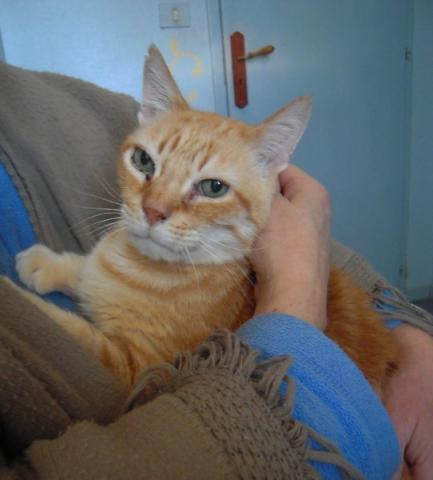 Les mamies et papis chats à l'adoption :) - Page 2 Image.php?dossier=uploads&image=manyko