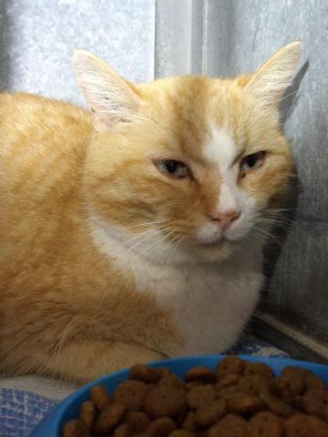 Les mamies et papis chats à l'adoption :) - Page 3 Image.php?dossier=uploads&image=marni_22