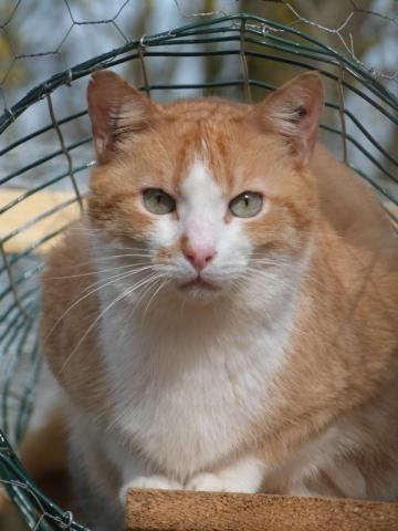 Les mamies et papis chats à l'adoption :) - Page 2 Image.php?dossier=uploads&image=mezzo0104