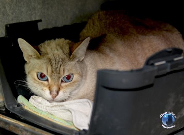 Les mamies et papis chats à l'adoption :) - Page 3 Image.php?dossier=uploads&image=milou_light