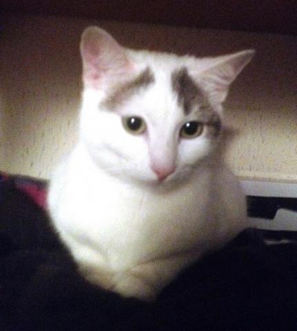 Les chats à adopter qui s'entendent avec les chiens - Page 2 Image.php?dossier=uploads&image=molly3