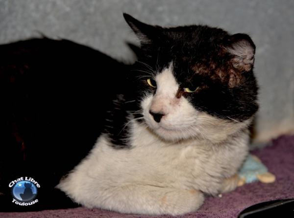 Nos positifs !! 45 amours de chats à adopter - Page 3 Image.php?dossier=uploads&image=obelyx10