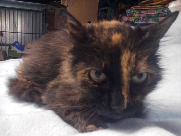 Les mamies et papis chats à l'adoption :) - Page 2 Image.php?dossier=uploads&image=photo0085