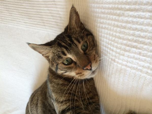 Les mamies et papis chats à l'adoption :) - Page 2 Image.php?dossier=uploads&image=photo_2