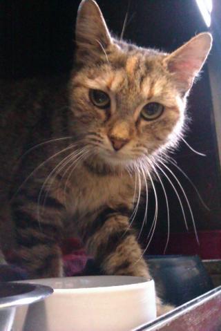 Nos positifs !! 45 amours de chats à adopter - Page 2 Image.php?dossier=uploads&image=princesse_reduc