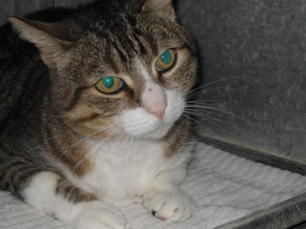 Les mamies et papis chats à l'adoption :) - Page 2 Image.php?dossier=uploads&image=pupucemajsite