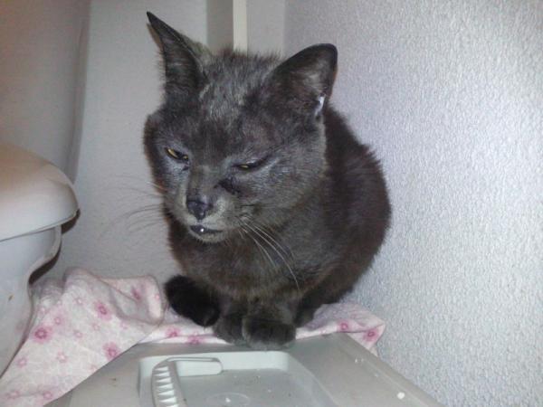 Les mamies et papis chats à l'adoption :) - Page 2 Image.php?dossier=uploads&image=sandre11