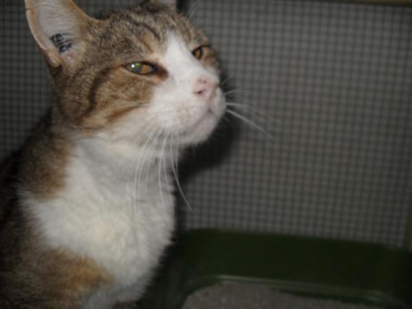 Les mamies et papis chats à l'adoption :) - Page 2 Image.php?dossier=uploads&image=sdc12015