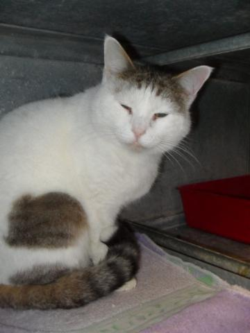 Nos positifs !! 45 amours de chats à adopter Image.php?dossier=uploads&image=sdc12819