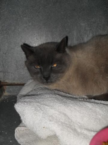Les mamies et papis chats à l'adoption :) Image.php?dossier=uploads&image=sdc13395