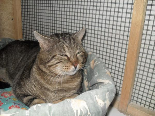 Nos positifs !! 45 amours de chats à adopter Image.php?dossier=uploads&image=sdc19784