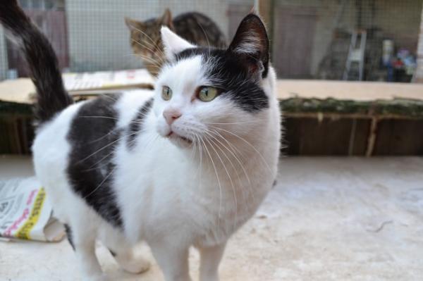 Les mamies et papis chats à l'adoption :) - Page 2 Image.php?dossier=uploads&image=sonate2111