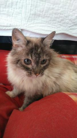 Les mamies et papis chats à l'adoption :) - Page 2 Image.php?dossier=uploads&image=stella