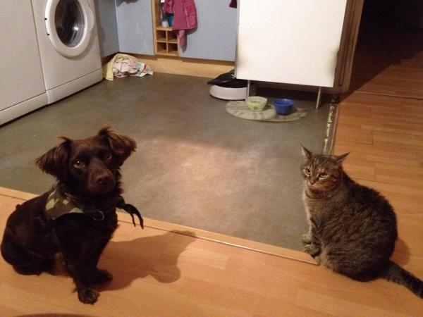 Les mamies et papis chats à l'adoption :) - Page 2 Image.php?dossier=uploads&image=thalia_et_les_chiens