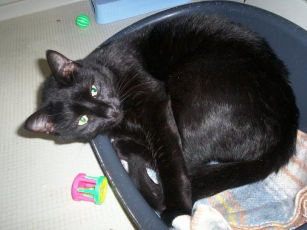 Les mamies et papis chats à l'adoption :) - Page 3 Image.php?dossier=uploads&image=timeho_beau